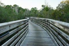 A boardwalk in swamp Stock Photo