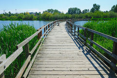 Boardwalk on swan lake Stock Images