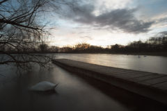 Boardwalk and Swan at the lake at sunset Royalty Free Stock Image