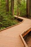 Boardwalk Through Temperate Rain Forest Stock Photos