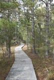 Boardwalk till och med skog arkivbilder