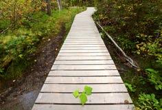 Boardwalk to Backguard Falls. In British Columbia Royalty Free Stock Photos