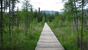 Boardwalk. To Liard River Hot Springs Provincial Park royalty free stock images