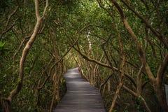 The boardwalk to the sea : The Laem Phak Bia Royal Project, Phetchaburi Thailand Royalty Free Stock Photos
