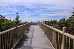 Boardwalk to the Sky TN NC Roan Mountain Royalty Free Stock Photo
