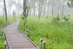 Boardwalk to the tropical rainforest Stock Photo