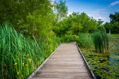 Boardwalk trail along the pond at Patterson Park in Baltimore, M Royalty Free Stock Image