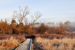 Boardwalk trail in deer lake park Stock Photos