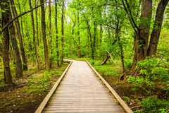 Boardwalk trail through the forest at Wildwood Park Stock Photos