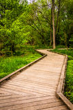 Boardwalk trail through the forest at Wildwood Park Royalty Free Stock Image
