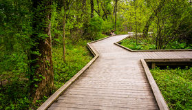 Boardwalk trail through the forest at Wildwood Park Stock Photo