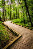 Boardwalk trail through the forest at Wildwood Park Royalty Free Stock Photo