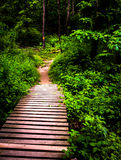 Boardwalk trail and lush spring forest in Codorus State Park Stock Photography