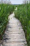 Boardwalk Trail Royalty Free Stock Photo