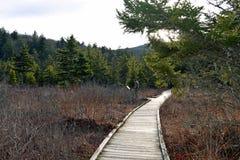 Boardwalk Trail in West Virginia Royalty Free Stock Photos