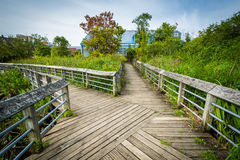 Boardwalk trail in a wetland, at Rivergate City Park, in Alexand Royalty Free Stock Images