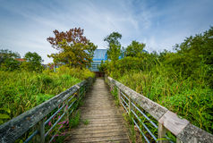 Boardwalk trail in a wetland, at Rivergate City Park, in Alexand Royalty Free Stock Photos