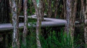 Boardwalk, Trees, Twist, Curved Stock Photos