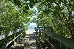 Boardwalk Under The Trees Royalty Free Stock Photography