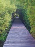 Boardwalk under trees tunnel stock photography