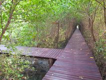 Boardwalk under trees tunnel royalty free stock images