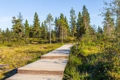 Boardwalk in Urho Kekkonen National Park in Finland. It is one o Royalty Free Stock Photos