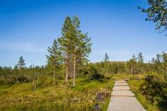 Boardwalk in Urho Kekkonen National Park in Finland. It is one o Royalty Free Stock Image