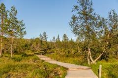 Boardwalk in Urho Kekkonen National Park in Finland. It is one o Royalty Free Stock Photo