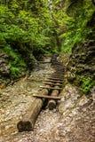 Boardwalk w lesie Zdjęcie Royalty Free
