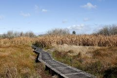 Boardwalk in wetland Stock Photo