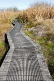 Boardwalk in wetland Royalty Free Stock Image
