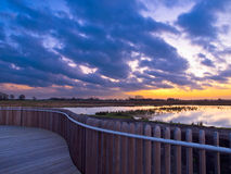 Boardwalk wetland Stock Photos