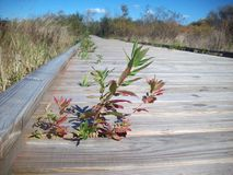 Boardwalk in the Wetland Stock Images