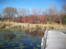 Boardwalk in the Wetland Stock Photography