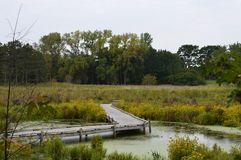 A boardwalk in the wetland. During autumn Royalty Free Stock Photography