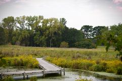 A boardwalk in the wetland. During autumn Royalty Free Stock Image