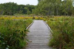 A boardwalk in the wetland. During autumn Stock Photo