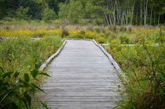 A boardwalk in the wetland. During autumn Stock Photography