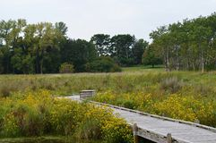 A boardwalk in the wetland. During autumn Royalty Free Stock Photo