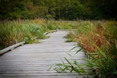 A boardwalk in the wetland. During autumn Stock Image