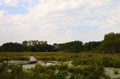 A boardwalk in the wetland. During autumn Royalty Free Stock Photos