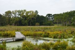 A boardwalk in the wetland. During autumn Stock Photos