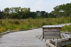 A boardwalk in the wetland. During autumn Royalty Free Stock Images
