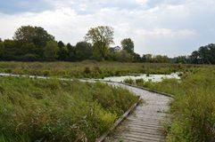 A boardwalk in the wetland. During autumn Stock Images