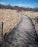 Boardwalk Through Wetland Stock Photo