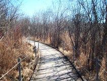 Boardwalk Through Wetland Stock Image