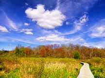White Memorial Nature Area. A boardwalk through a wetland ecosystem at white memorial conservation center in Litchfield Connecticut on a beautiful spring day Royalty Free Stock Images