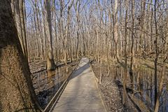 Boardwalk through a wetland forest. In Congaree National Park in South Carolina Stock Photo