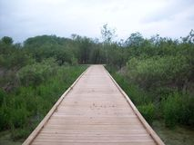 Boardwalk Through The Wetland Royalty Free Stock Photography