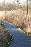 Boardwalk through wetland habitat Stock Photo